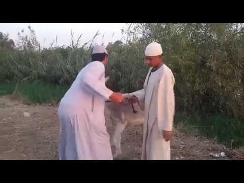 الحاج مسعود اشتري حمار واتنين جساسين /هتضحك يعني هتضحك حتي البكا ء 2018
