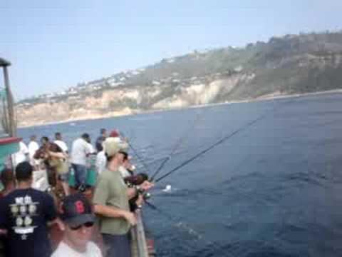 Redondo beach sport fishing rocky point youtube for Redondo sport fishing
