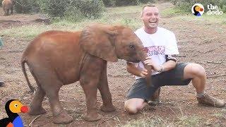 Baby Elephant ATTACKS Man | The Dodo