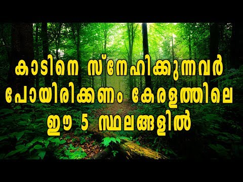 5 Best Forest Destinations In Kerala | Oneindia Malayalam