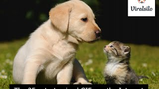 Funny animal - top 35 cutest animal gifs in the internet