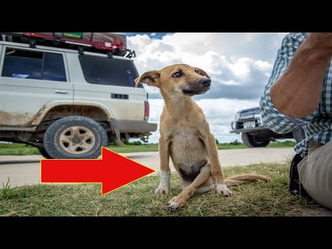 Puppy With Serious Injury Makes A Dramatic Move To Finally Find Help..