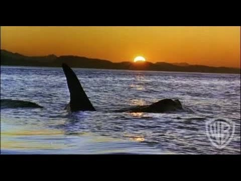 Free Willy - Trailer #5