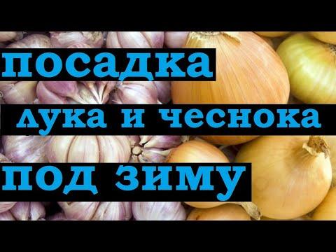 Вопрос: Когда сажать лук и чеснок под зиму в Подмосковье?