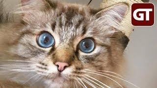 Thumbnail für Die Katzen-Chroniken - Folge 1 - GT Talk #53
