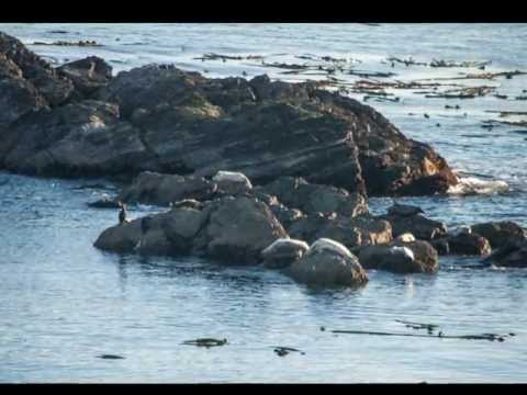 San Juan Islands: Lopez Island, October 2012