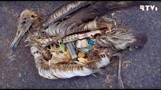 Cколько пластика съедает средний европеец?