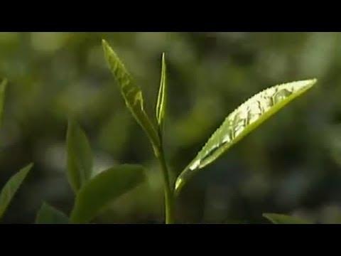 বাংলা সিলেটি ওয়াজ মাহফিল | Bangla Sylheti Waz Mahfil.