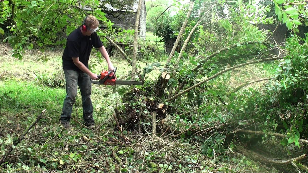 Communication on this topic: How to Clear Large Shrubs, how-to-clear-large-shrubs/