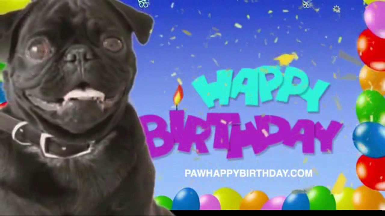 Adorable Happy Birthday Pug