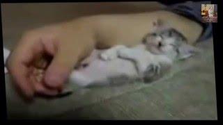 Смешное видео про животных Улетные животные/ Funny video about animals