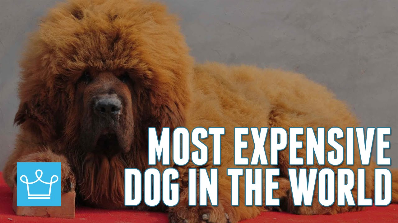 Rarest Dog In The World | www.imgkid.com - The Image Kid ...