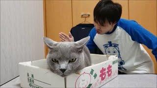 後ろのダンサーさんの華麗なオーラが凄すぎて、逆に直視できないでいる猫