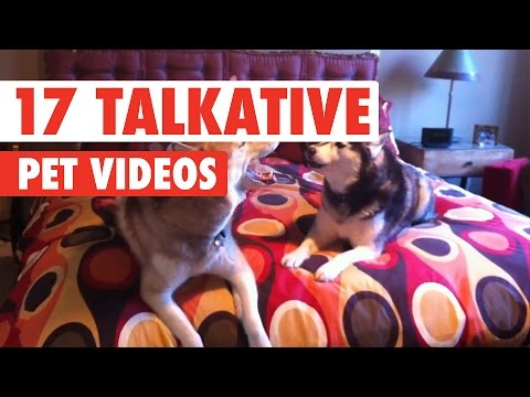 17 Funny Talkative Pets Video Compilation 2017