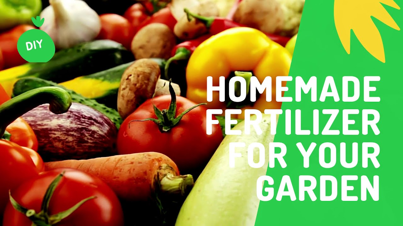 Homemade Fertilizers For Houseplants And Gardens 15 Easy To Make Options
