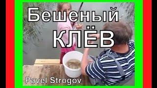 БЕШЕНЫЙ КЛЁВ на Селигере!!!