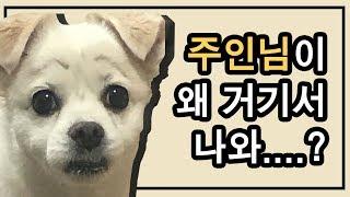 주인이 사라지는 마술을 본 강아지들의 반응은?!