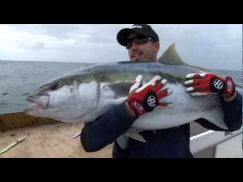 YELLOWTAIL KINGFISH GIANTS AT RANFURLY BANKS - YouFishTV