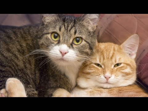 This Video Will Persuade You Into Getting 1 More Cat!