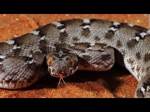 """Snake """"fluttering"""" in rock music in the United States - Hot news today"""