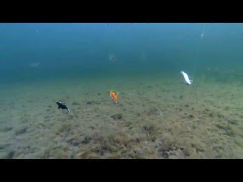 Squid Jigging