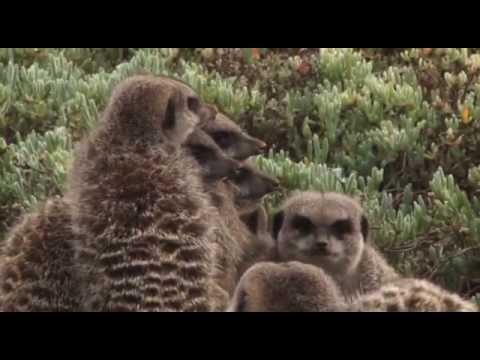 Meerkat Adventures Oudtshoorn South Africa