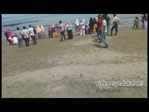 Kawanan Ikan Paus terdampar di Perairan Krueng Raya, Aceh Besar