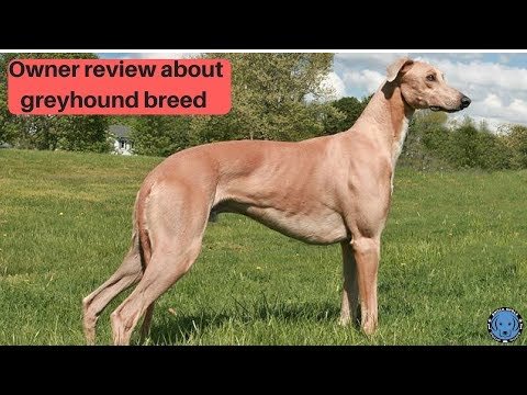 Pet Care - Owner review about greyhound breed - Bhola Shola
