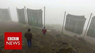Cloud Catchers In Peru   BBC News