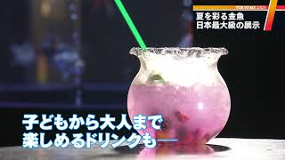 夏の風物詩「金魚」の日本最大級というイベントが、東京・墨田区のすみ...