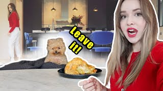 Leaving My Dog Alone With A Whole Chicken | Leave It Challenge