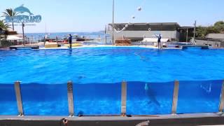 Marineland Mallorca Dolphin show