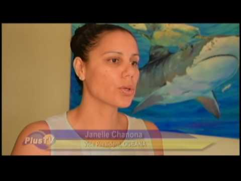 Belize Coalition stands strong against offshore oil exploration