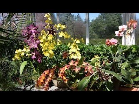 Orchid Show (Orchidelirium) 2017 The New York Botanical Garden