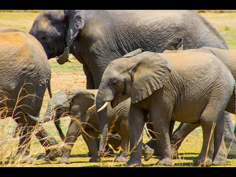 Malawi African biodiversity expedition video by travel writer Helena Smith