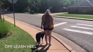 7 Month Old Border Collie | Best Border Collie Dog Training | Off Leash K9 | Board & Train |Oklahoma