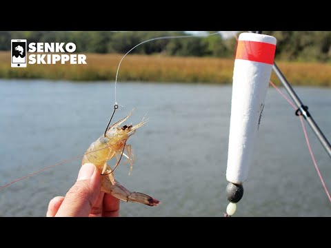 Catch Your LIMIT With This Float Fishing Rig! (Back Creek Saltwater Fishing)
