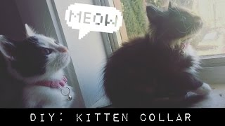 Turn A Bra Into A Kitten Collar || DIY(, 2016-04-20T13:34:30.000Z)