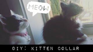 Turn A Bra Into A Kitten Collar || DIY(, 2016-04-20T13:34:30.000Z)