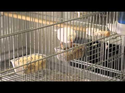 alimentazione-invernale-dei-canarini