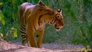 Загадки планеты Земля  Чудеса природы  Документальный фильм