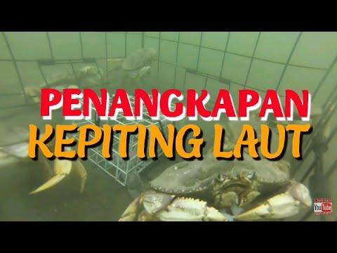 Wow.. Penangkapan Kepiting Laut  #Kehidupan bawah laut