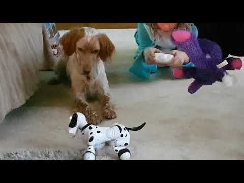 Dogs react to Smart Dog toy!