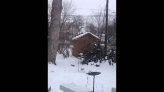 Awesome squirrel jump to grandpas bird feeder