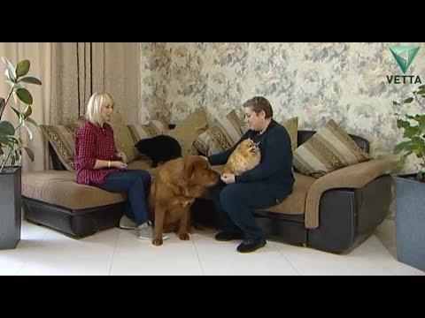 Собаки и кот в одном доме: история взаимоотношений