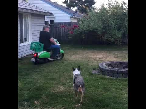 Dad rides Captain Murphy in the backyard, has a good time