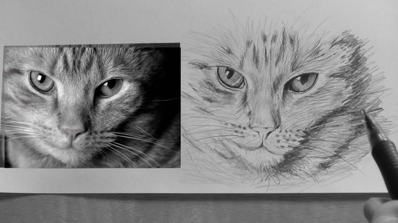 How to draw a Cat -lesson 5 in -realism drawing tips ...
