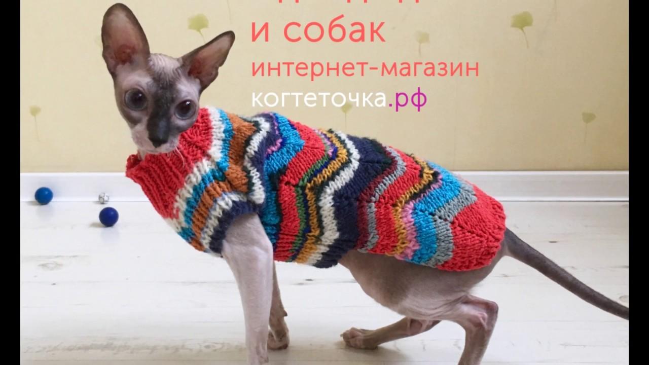 Обзор одежды для кошек и собак - YouTube