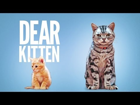 Dear Kitten from YouTube · Duration:  2 minutes 58 seconds