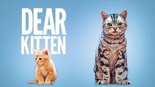 Dear Kitten